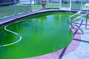 Treat-Algae-Growth